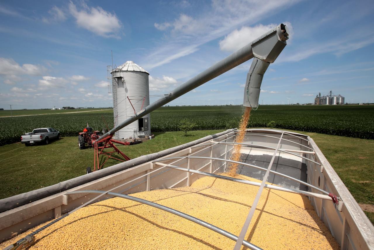 巴西是全球最大的大豆出口國。