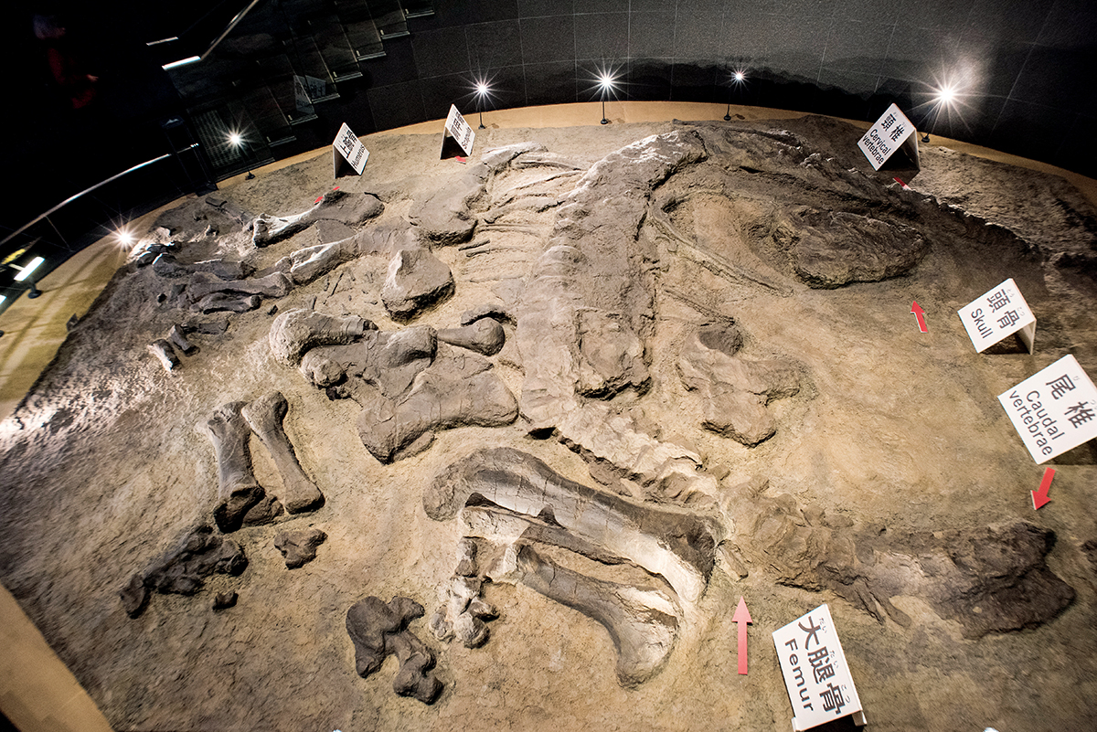 學術價值甚高的福井縣立恐龍博物館,既可親子遊,又適合受考古歷史的朋友。