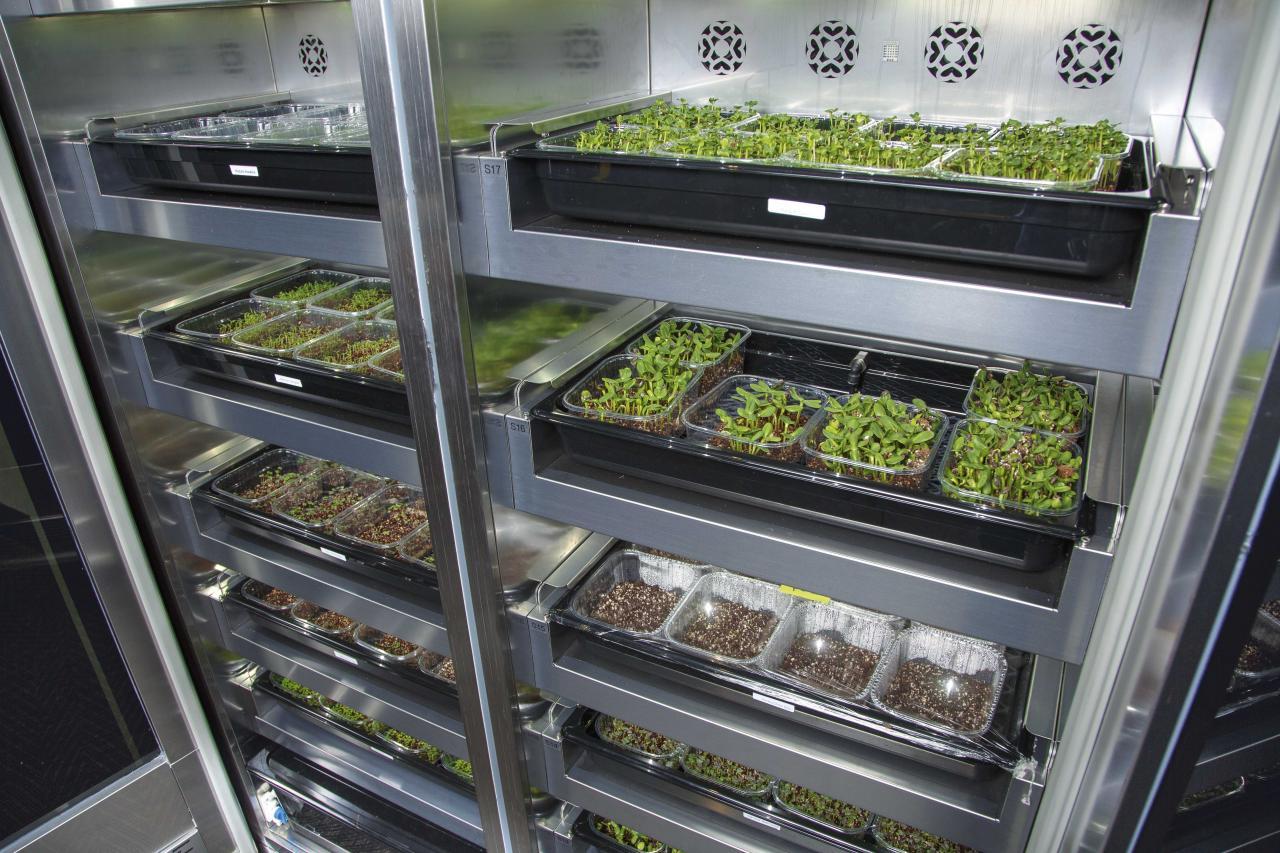 餐廳內設置紫外燈櫃,種植多款微菜苗,作入饌之用,並由專人在英國監察櫃內微菜苗的生長狀况。