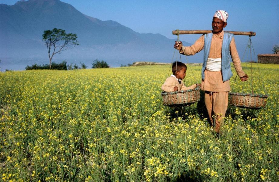 「一帶一路」覆蓋多個國家,物產豐富。圖為尼泊爾農夫。