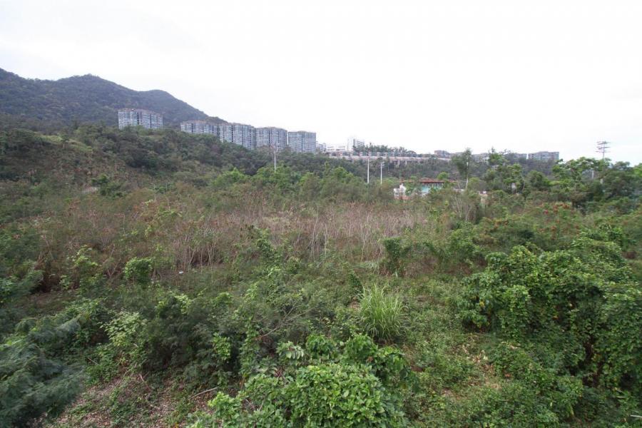 大埔白石角優景里地皮有10家發展商或財團入標競投,當中僅有中信泰富及中海外2間中資入標。
