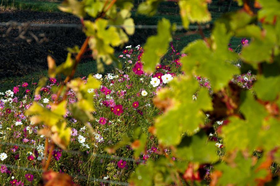若能維持生物多樣性,也代表葡萄園的環境平衡健康。