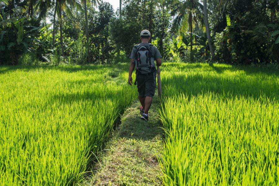在稻田上散步,悠閒至極。