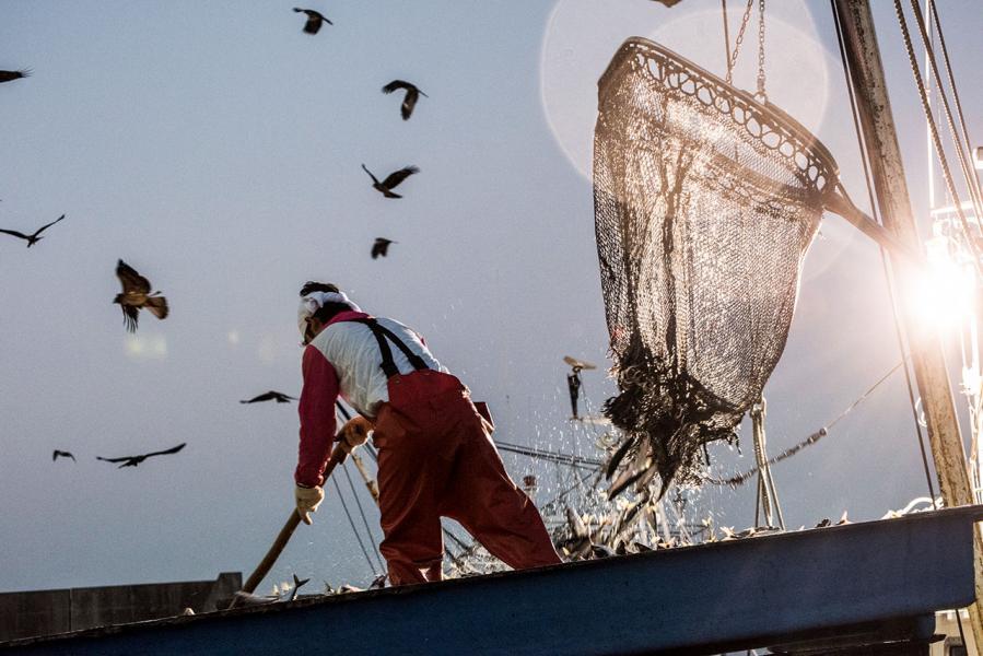 在漁市場的岸邊,有時可以看到漁獲上水運到市場的一刻。