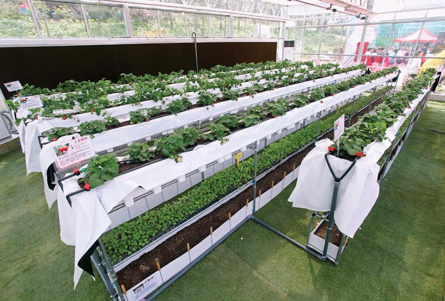 環保溫室內設置有多層式種植棚,上層種植水果、下層種菇菌類,善用空間。