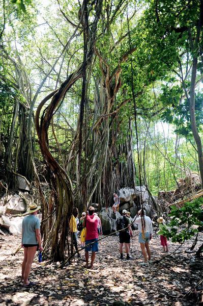塞舌爾島上的植物都是超大型的。