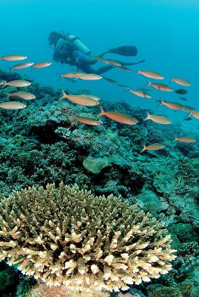 塞舌爾美麗的水底世界。