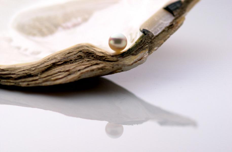 日本養殖的Akoya珍珠。