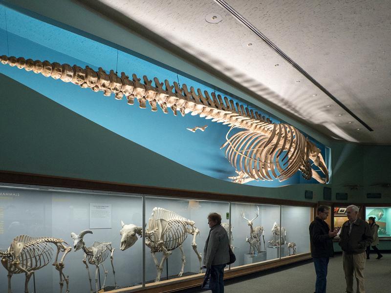 國立歷史自然博物館單是展出動物骨骼的展館,已讓人目不暇及。