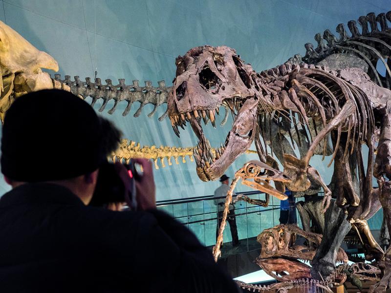 真化石色澤較深,不難分辨。