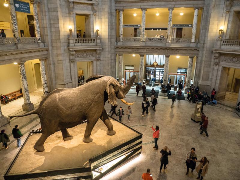國立歷史自然博物館大廳,看過《翻生侏羅紀2》一定會有印象。