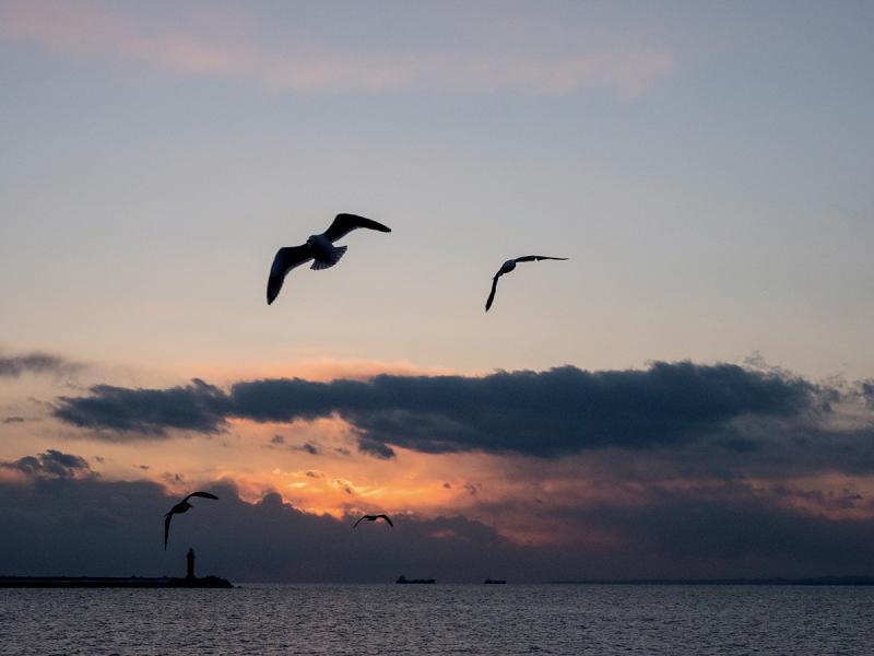 坐上Sea Crane遊覽船,可到內海看夕陽景色。