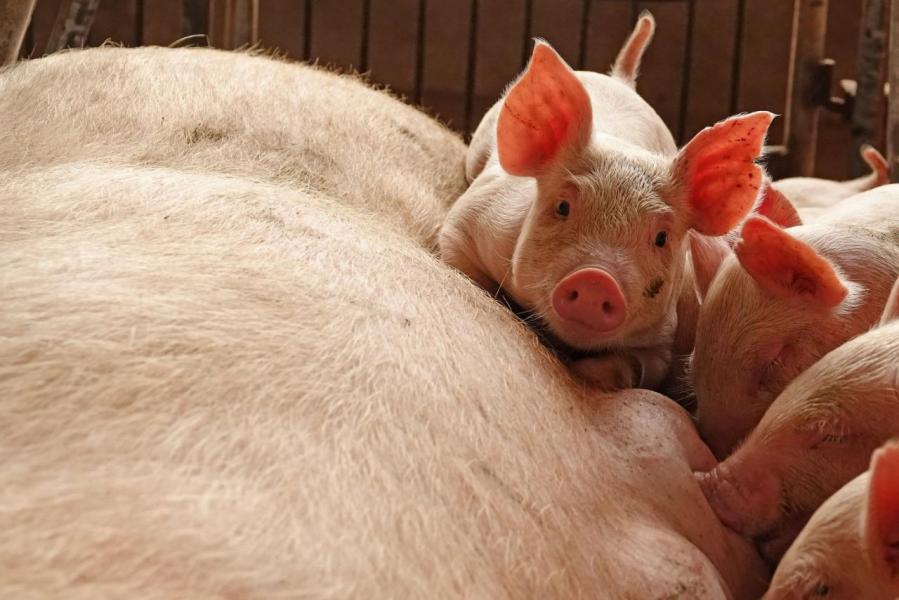 德國的素食風源於當地對動物權益及環境保護的關注而出現。