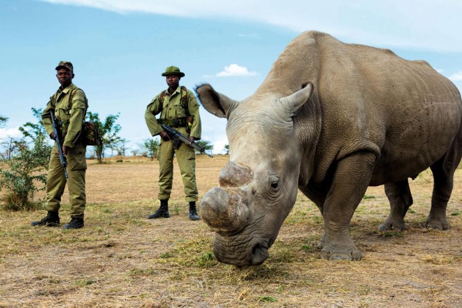 非洲的自然保護已經成為全球關注焦點。