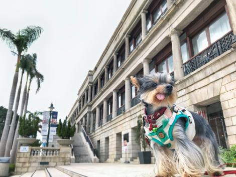 「狗狗攝影周遊樂」路線由專業攝影師Karen Yung 設計,揀選赤柱十多個最適合與毛孩拍攝的位置,讓會眾與愛犬漫步兼享打卡之樂。