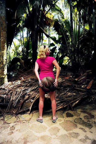 全球最大的海椰子,外貌有若女性臀部。
