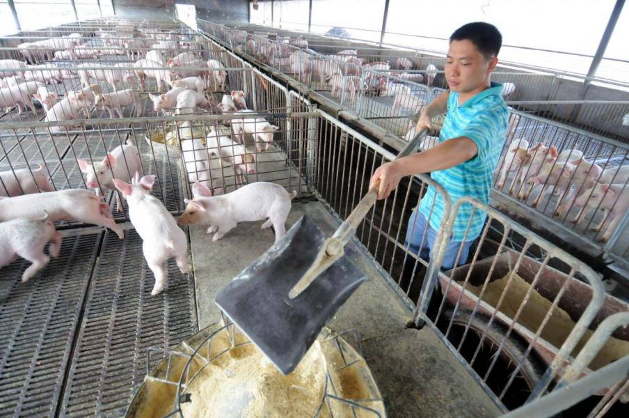 有智庫促請歐洲國家在二○五○年前將肉類和奶製品的產量減半。