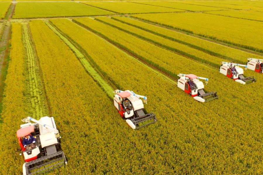 中國早前大減美國農產品進口,令當地農民苦不堪言。