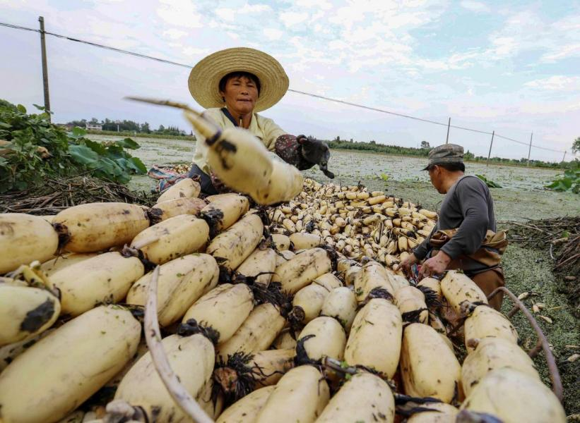 至二○五○年全球人口將攀升至九十億,人們對糧食的需求量預計將較現在增加一點一倍。